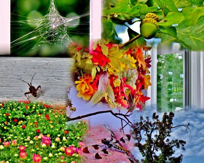 porch collage