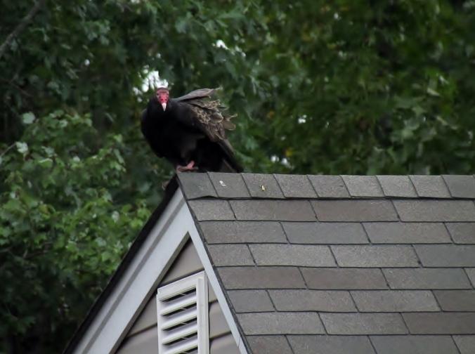 """""""I see ya Tone!  Hey Tone, can ya hear me?  I sees ya there on da roof Tone."""" [JeZus, don't he ever shadup?""""]"""