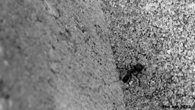 The Ant in Concrete Jungle