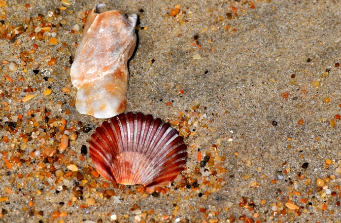 Shellmates