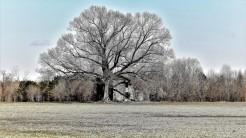 3037-2-tree-house