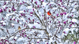 snowychinwag